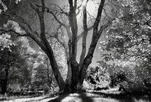 Albero Bella. The Ethereal Mystery and Ancient Wisdom of Trees