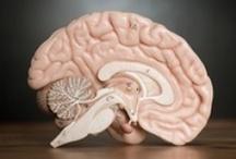Amado cerebrain