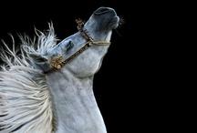 Horses / by Joanna W