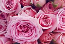 Romantic Colors