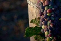 Dans le vignoble