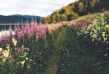 Nature & Landscape Photography / This board features some of the most beautiful wildlife photos found on Pinterest. The purpose of this board is to be a source of inspiration, creativity, and motivation for nature and wildlife photographers! We want these images to spark the motivation to produce and capture the beauty of #nature.  YourArtGallery.com
