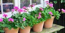 Garden & Landscape Ideas / Outdoors, yard, backyard, landscape, garden, flowers, shrubs, garden sheds, fences, vegetable garden, kitchen garden, potting table, garden tools