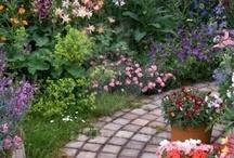 Garden / Trädgård