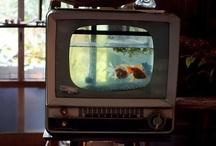Cool aquarium ideas :) / Aquael loves creativity! Especially when it comes to aquaristics.