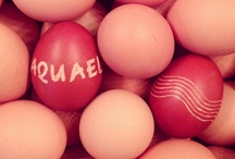 from Aquael with ♥