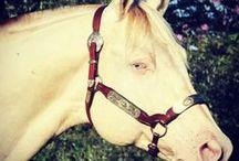 Cavalos ♡/Horses