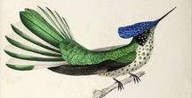 Botanical and Zoological Art / Vintage Botanical and Zoological Art