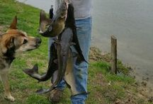 Catfish Fishing / Catfish fishing tips, ideas, pictures and tee shirts for the fisherman or woman.