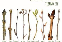 Multiplicación vegetal / Reproducción vegetal