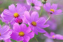 Flores y plantas compañeras