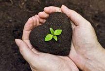 Compostar / Compost, humus de lombriz, biofertilizantes, abonos verdes, té de compost...