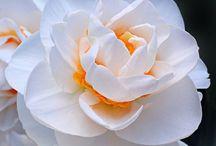 Flowers / I fiori più belli.Quelli che incantano la mia anima.