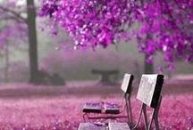 2014 Pantone color • Radiant Orchid / El color del año 2014 es Radiant Orquid, está compuesto por colores fucsia y tonos púrpura y rosa, es expresivo, enigmático y exótico. • Pantone color of the Year for 2014 is Radiant Orchid, a captivating, magical, enigmatic purple rose.