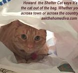 """HOWARD THE SHELTER CAT / Howard the Shelter Cat was adopted from a local shelter I volunteered at. He was bounced around from shelter-to-shelter to prevent an untimely demise. He was a Pet Smart reject having been adopted out, but returned because he """"shed and got on the furniture."""" He spent almost a year as a shelter cat until I could take no more and brought him home. Now, he lives a rather pampered life and helps me with my real estate business."""