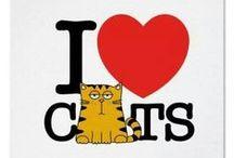 Pipoca the cat / Em homenagem ao nosso gatinho.