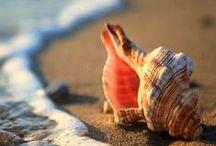 Fotografía / Fotografías de la vida real, con efectos naturales... ¡espléndidas fotos para disfrutar!