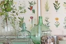 Botanical & Scientific