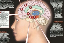 Cognition/mind/soul