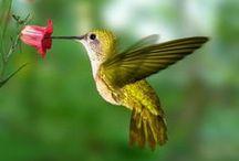 Vogeltjes, Birdies