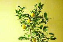 GREEN IS MY FAVORITE COLOR / On crée beaucoup mieux avec la présence d'une plante dans la pièce!