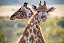 Afrika állatai