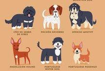 dogs / koirat