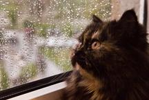 Masika / My fluffy cat