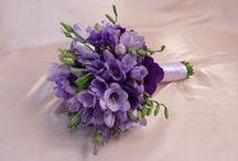 Purple/Lilac