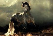 mooie paardenfoto's