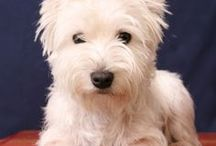 Westies / by Jackie Hall