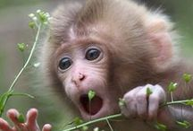 Animal ! Animal ! / by mangmoom