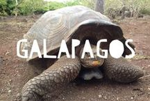 Travel to Galapagos Islands / Things to do in Galapagos Islands and useful travel tips to plan your trip to Galapagos Islands