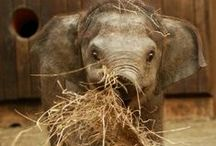 Elephants...love!