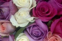 But he, who dares not grasp the thorn, should never crave the rose! / Roses…my favourite flower!