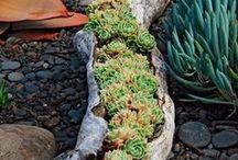 garden ideas....