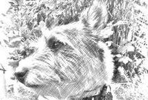 MY - Paint & Graphics © Hedwig.cz / počítačovky