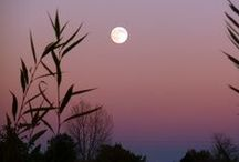 Moonrise and Moonset / by Eileen Morgan
