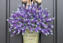 Lavender ideas