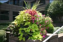 Our Portfolio-Commercial / Commercial Landscaping Projects Installed By Grounds Control HSV