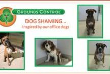 Dog Shaming / Dog shaming...inspired by our office dogs