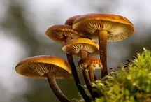 Shrooms / Mushrooms, Fungi and Lichen