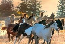 Horses / Rep in if u like horses follow of u ride horses comment if u are scared of them and like if u like them
