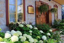 Gardening/yard / by Stephanie @ Healing Roots
