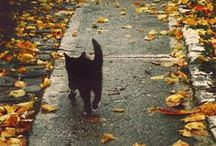Autumn / by Emma Johansson