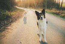 Hi Doggy / by Emma Johansson