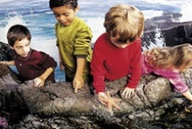 Boston Attractions for Kids