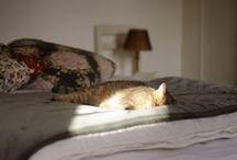 Sleepy kitties / by Emma Johansson