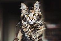 Cat portraits / by Emma Johansson