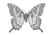 paper cards - butterflies swallowtail / by Susan Harwell Hendrick